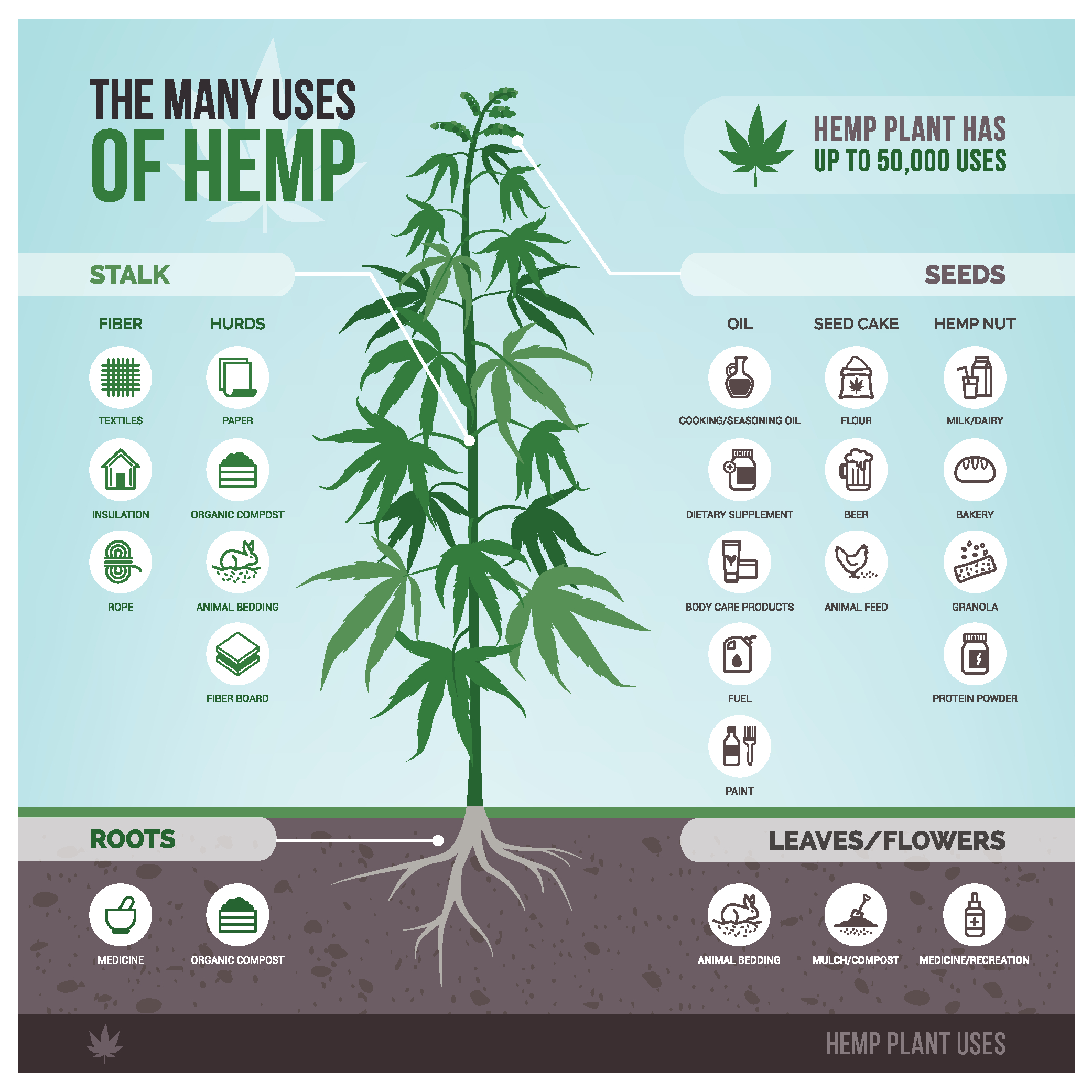 The Many Uses of Hemp infographic. Image via Medium.