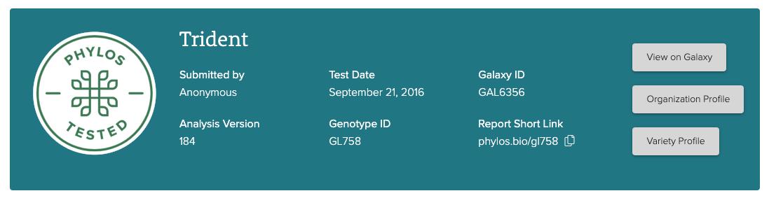 Genotype Report header design layout